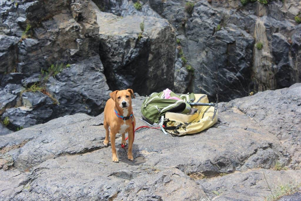 Dog Hiking With Gear