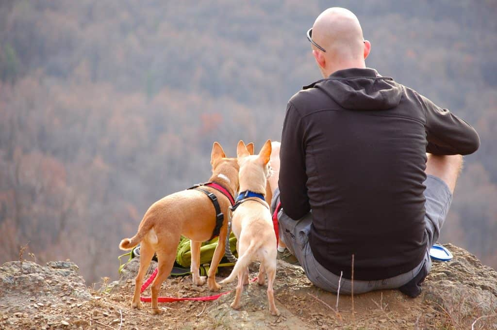Man Hiking With Dogs