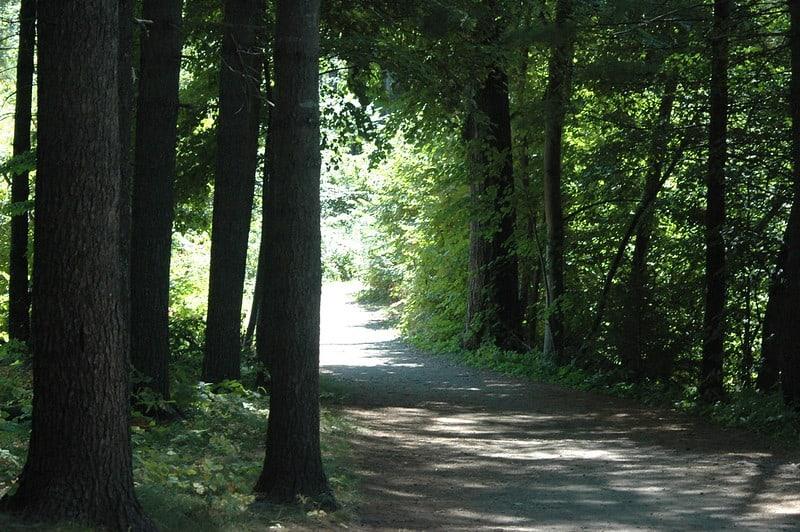 Mackworth Island Trail